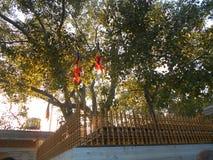 Buda Anuradhapura Jaya Sri Maha Bodhiya da herança da natureza da beleza fotografia de stock