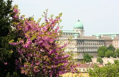 Buda Castle. In Budapest, Hungary royalty free stock images