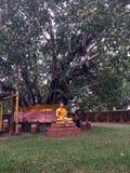 A Buda de bronze da estátua senta-se com o calmo sob a árvore de BO imagens de stock royalty free