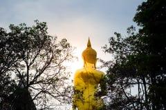 Buda de oro iluminado con la silueta del árbol Fotografía de archivo