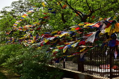 Buda de Sarnath, Stupa imagens de stock royalty free