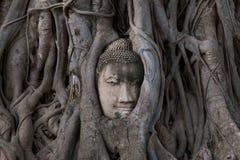 Buda dirige la estatua atrapada en raíces del árbol de Bodhi en Wat Mahathat, parque histórico de Ayutthaya, Tailandia Fotos de archivo libres de regalías
