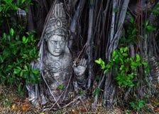 Buda em uma árvore Imagens de Stock Royalty Free