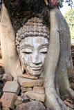 Buda en la raíz del árbol Imágenes de archivo libres de regalías