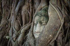 Buda en un árbol Fotografía de archivo libre de regalías
