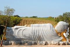 Buda looking the vineyard royalty free stock photos