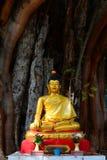 Buda meditating bajo un árbol fotos de archivo