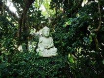 Buda na árvore foto de stock