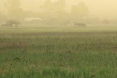 Buda przy środkiem ryżu pole Obraz Royalty Free