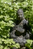 Buda que esconde na cevada do verão fotos de stock royalty free
