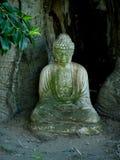 Buda resistida fotografia de stock