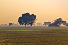 Buda rolnik w ranek mgle Fotografia Royalty Free