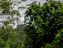 Buda a través de árboles Fotografía de archivo