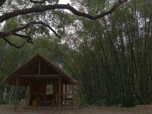 Buda w bambusowym lesie zdjęcia royalty free