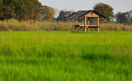 Buda w irlandczyków ryż polu Obrazy Royalty Free