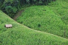 Buda w kukurydzanym polu Obrazy Royalty Free