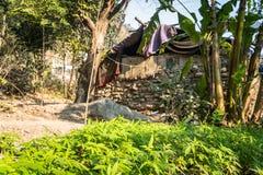 Buda w lesie który słońce konopie pole jako przedpole fotografia royalty free