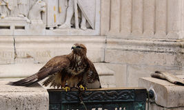 Budapest, águila Fotos de archivo libres de regalías