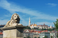 Budapest. Lion ornating the Chain bridge, with the Mathias church and other buildings of the Castle district in the background, Budapest, Hungary royalty free stock photos