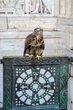 BUDAPEST, HUNGARY/EUROPE - SEPTEMBER 21 : Hawk on gate at base S. T Stephens statue at Fishermans Bastion in Budapest Hungary on September 21, 2014 Stock Photo
