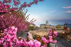 Budapest, Hungary - The famous Buda Castle Royal Palace on a Spring afternoon with blooming cherry blossom. At foreground stock image