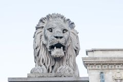 Budapest/Hungary-08 09 18: Lew statuy rzeźby zwierzęcy most Budapest fotografia royalty free