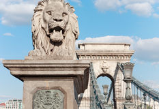 Budapest. Hungary. Lion of a Chain bridge Stock Photos