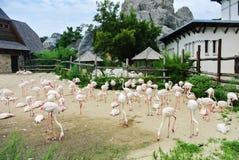 BUDAPEST, HUNGRIA - 26 DE JULHO DE 2016: Uma abundância dos flamingos no jardim zoológico de Budapest e no jardim botânico Fotografia de Stock
