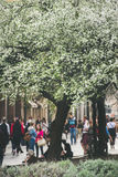 BUDAPEST, UNGARN 23. MÄRZ 2017: Frühjahrbaumblüte in Europa Stockfotos