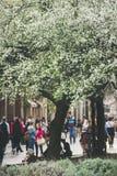 BUDAPEST, WĘGRY MARZEC 23, 2017: Wiosny drzewny okwitnięcie w Europa Zdjęcia Stock