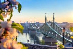 Budapest, Węgry - piękny swoboda most przy wschodem słońca z czereśniowym okwitnięciem Obraz Royalty Free