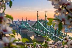 Budapest, Węgry - Piękny swoboda most przy wschodem słońca z czereśniowym okwitnięciem wokoło Obraz Stock
