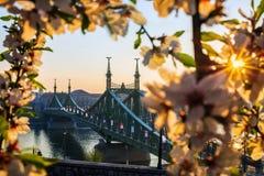 Budapest, Węgry - Piękny swoboda most przy wschodem słońca z czereśniowym okwitnięciem wokoło Zdjęcia Royalty Free