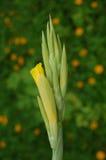 Budd y flor Imágenes de archivo libres de regalías