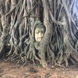 Budda Stockfoto