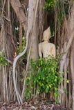 Budda traped nas raizes da árvore foto de stock