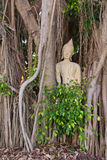 Budda traped in the tree roots Stock Photo