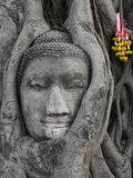 Buddah Stock Photo