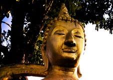 Buddha†‹ stock foto