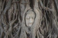 buddha Zdjęcia Royalty Free