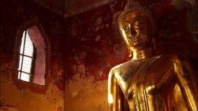 buddha video estoque