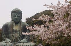 Buddha av Kamakura med sakura, Japan arkivfoto