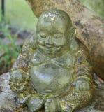 Buddha av trädet Arkivfoton