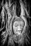 Buddha of Ayutthaya  Royalty Free Stock Image