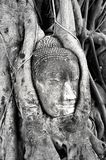 Buddha of Ayutthaya Stock Images