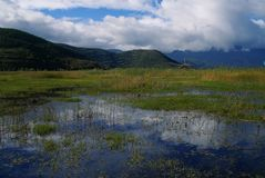 Buddha banners in Lugu lake marsh. It's a early autumn day. There are bunch of Buddha banners in Lugu lake marsh Royalty Free Stock Image