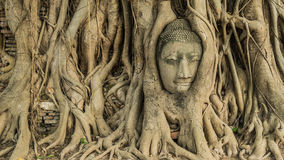 Buddha in banyan roots. Buddha's head in banyan tree roots in Ayutthaya, Thailand Royalty Free Stock Photo