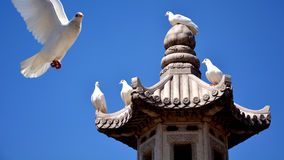 Buddha benedice la pace Immagine Stock