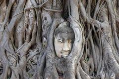 Buddha-Bild überwältigt und durch Baumwurzeln in Ayuthaya, Thailand umgeben stockfoto