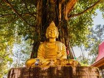 Buddha-Bild unter Bodhi-Baum Lizenzfreies Stockfoto